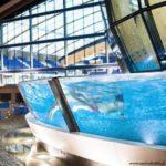 Aqua Lublin - Basen Olimpijski Lublin