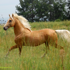 Stadniny koni w Lublinie