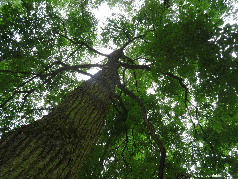 """Відомі та невідомі куточки Любліна – ліс """"Старий Гай"""""""